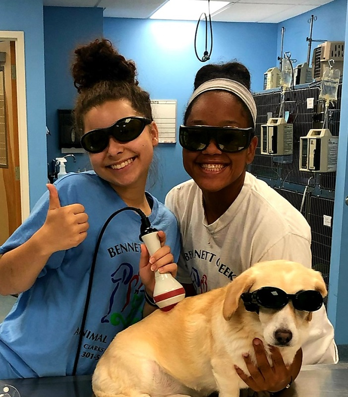 Laser Therapy in Clarksburg, MD