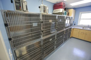 Bennett-Creek-Animal-Hospital-MD-47